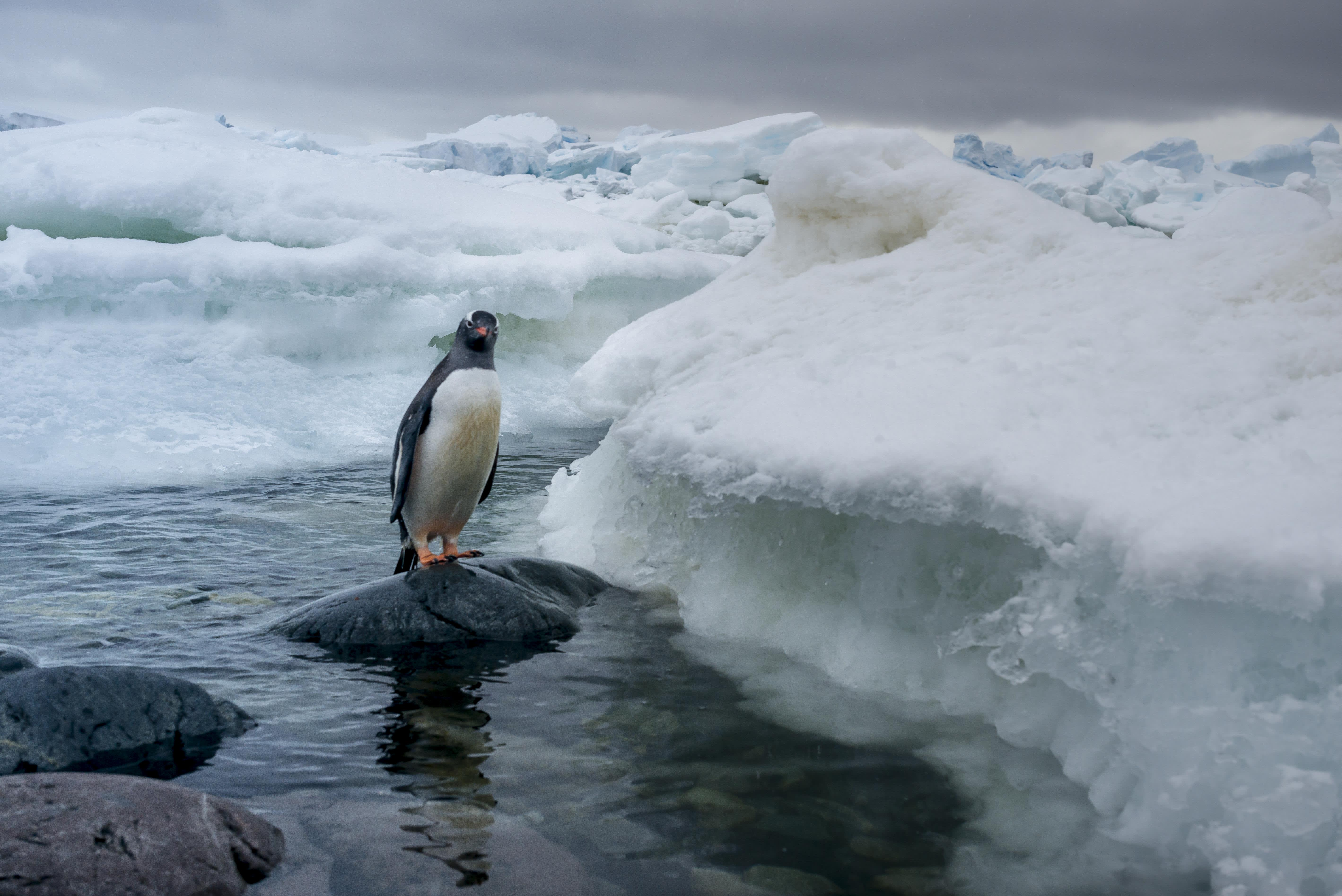 Antarctica registers hottest temperature ever at nearly 65 degrees Fahrenheit
