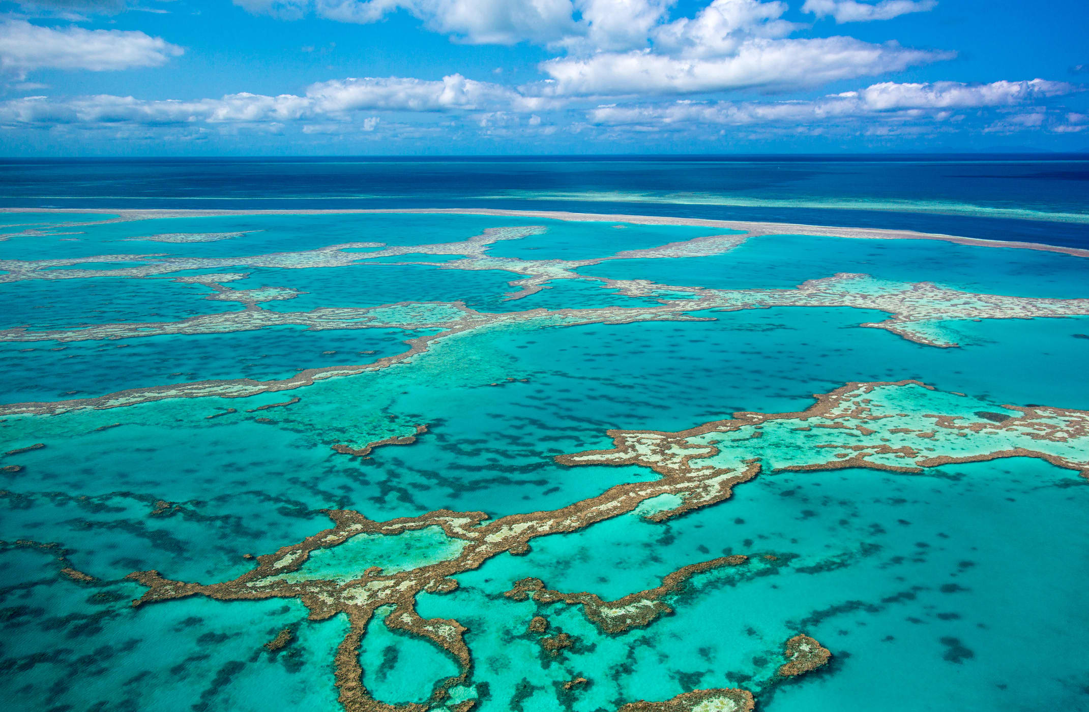 How researchers are trying to save the Great Barrier Reef