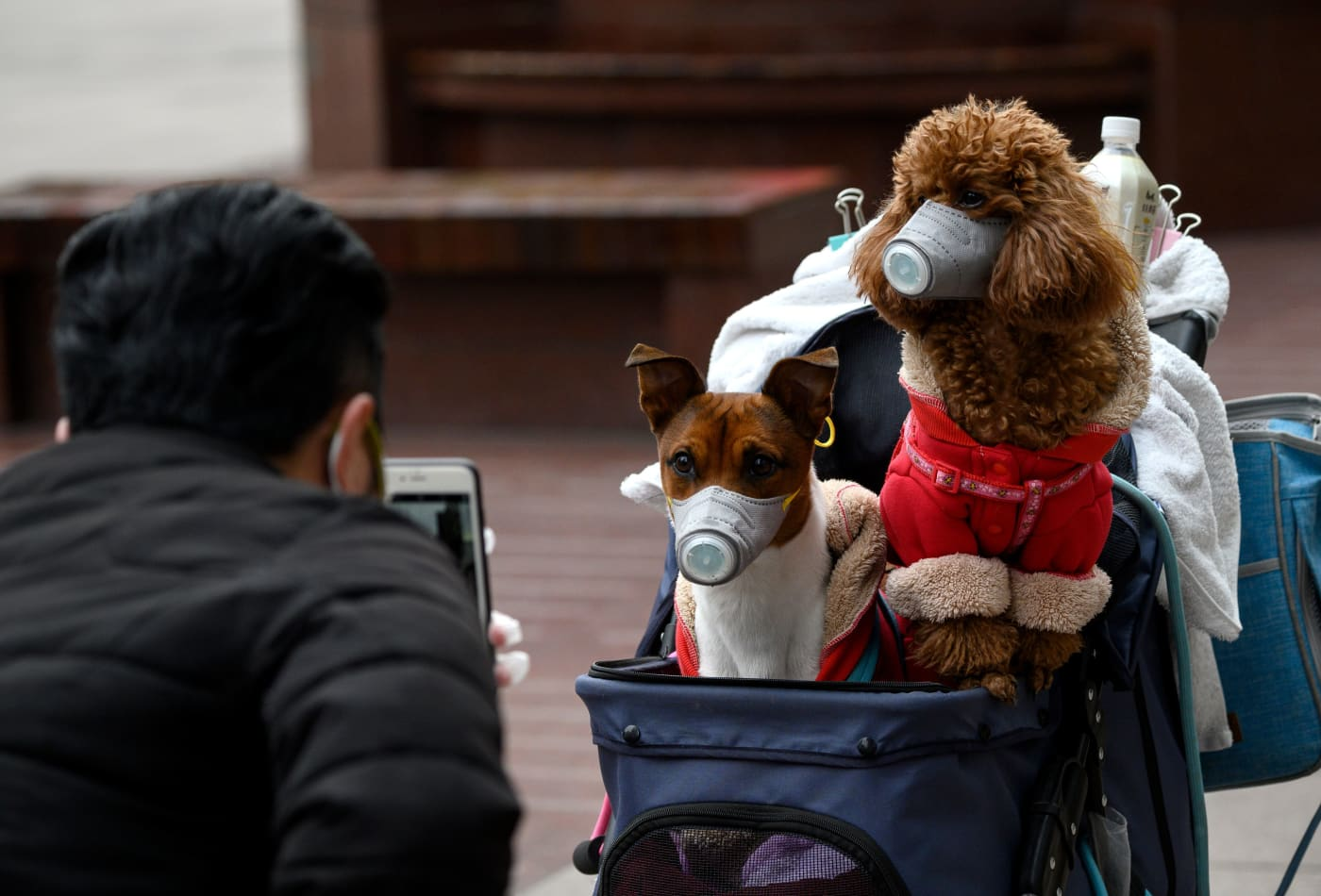 A dog in Hong Kong tests positive for the coronavirus, WHO officials confirm