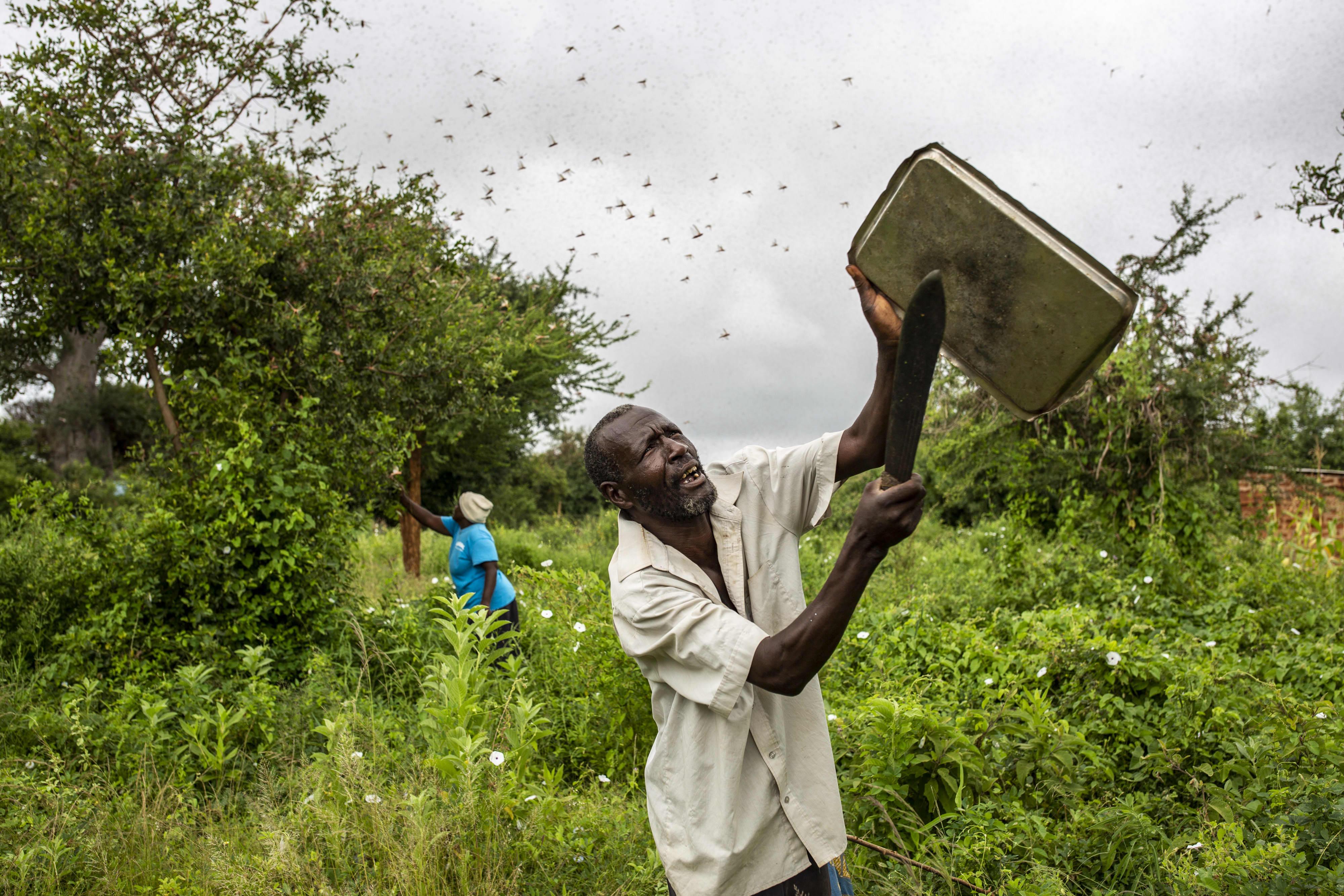 Plague of locusts threatens East African economies as UN ...