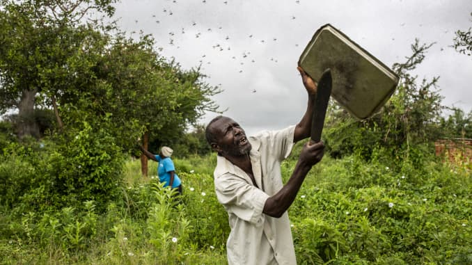 GP: Locust Swarms Ravaging East Africa 200220