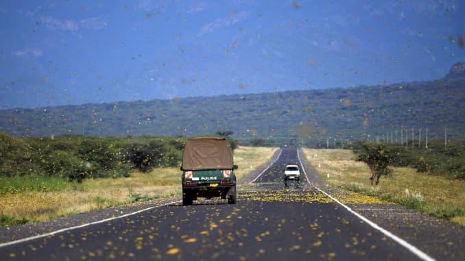Locusts swarm acros a highway at Lerata village, near Archers Post in Samburu county, approximately 300 kilomters (186 miles) north of Kenyan capital, Nairobi on January 22, 2020. (Photo by TONY KARUMBA / AFP) (Photo by TONY KARUMBA/AFP via Getty Images)