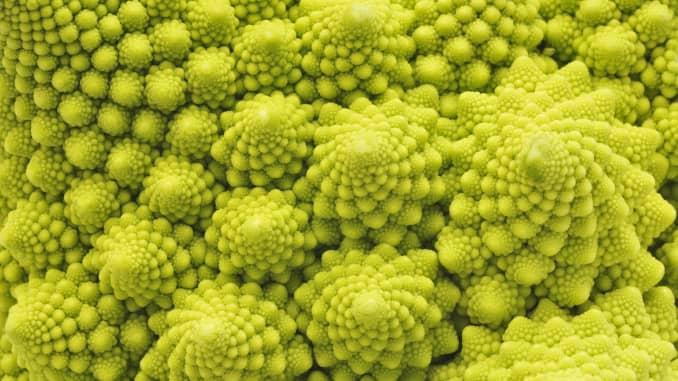 GP: Romanesco Broccoli 200330