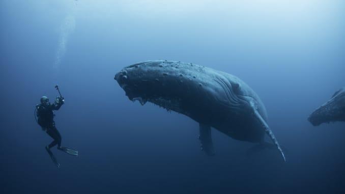 GP: humpback whale, Revillagigedo Islands, Colima, Mexico 200330