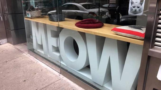 CNBC: Cafe Meow Parlour New York