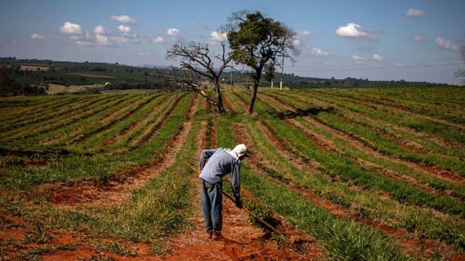 GP Brazil Coffee farmer 200416