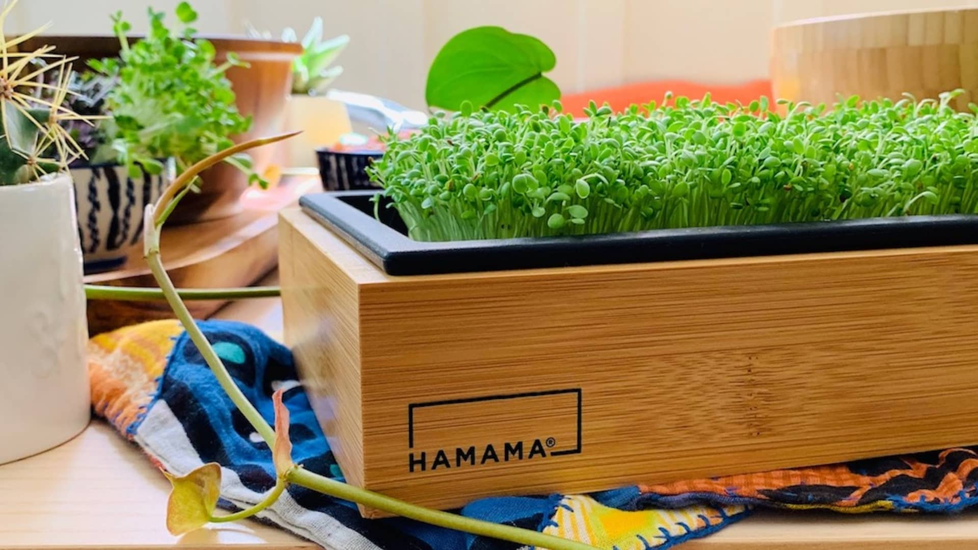 Microgreen kit producer Hamama is helping people grow green produce at home.