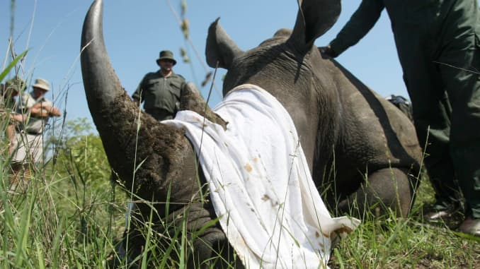 'Filthy bloody business:' Poachers kill more animals as coronavirus crushes tourism to Africa