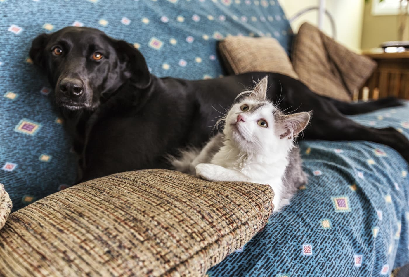 'How often should I clean my dog?' 'Do pets need face masks?': What to know about your pet and Covid-19