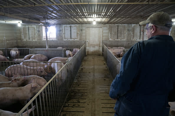 www.cnbc.com: Trump push to keep meatpacking plants open comes as pork producers profit from China trade deal