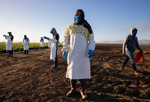 Coronavirus devastates agriculture: Dumped milk, euthanized livestock