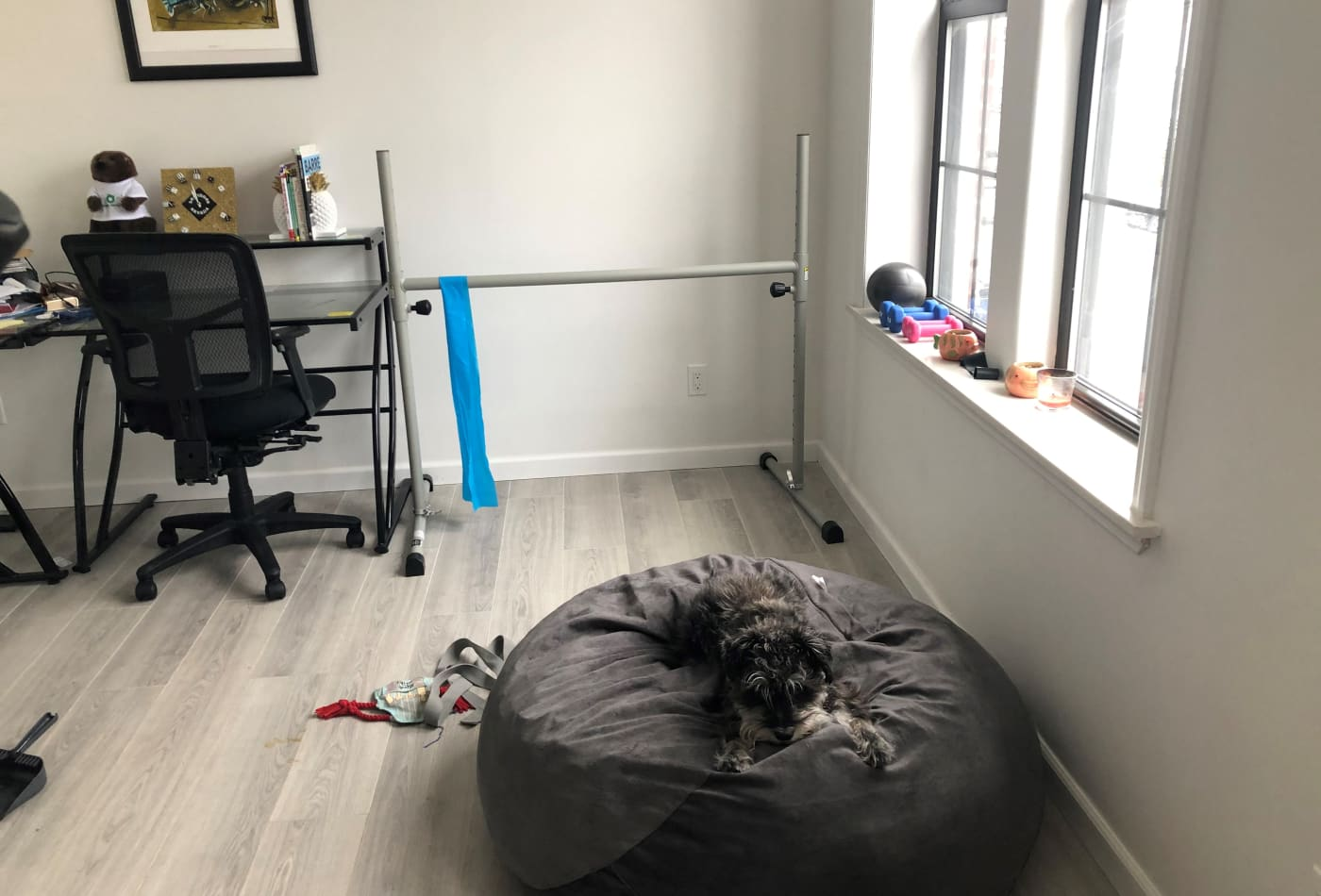 Reyna Gobel's basic home fitness center, workspace, and canine co-worker.