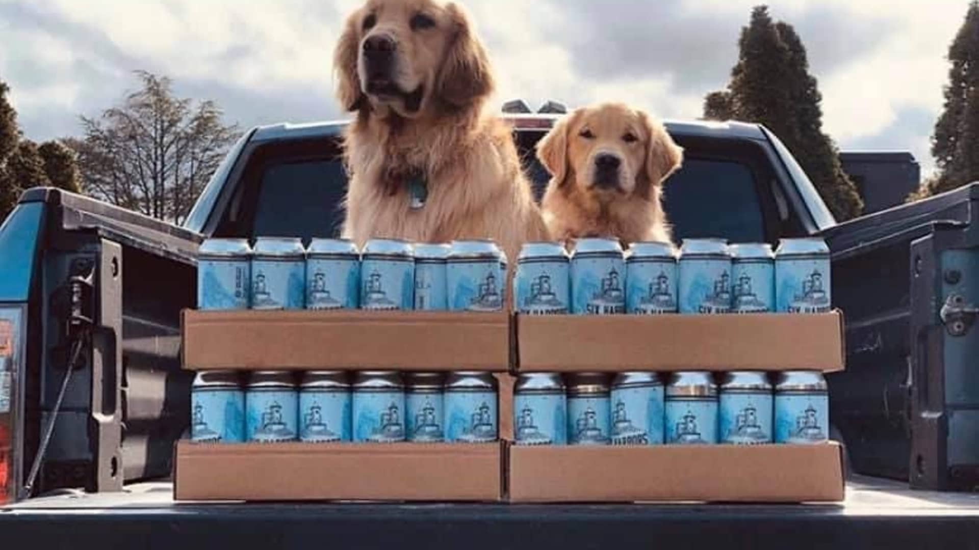 Golden retrievers Buddy, 3, and Barley, 1, join their owners on beer deliveries amid Covid-19 pandemic.