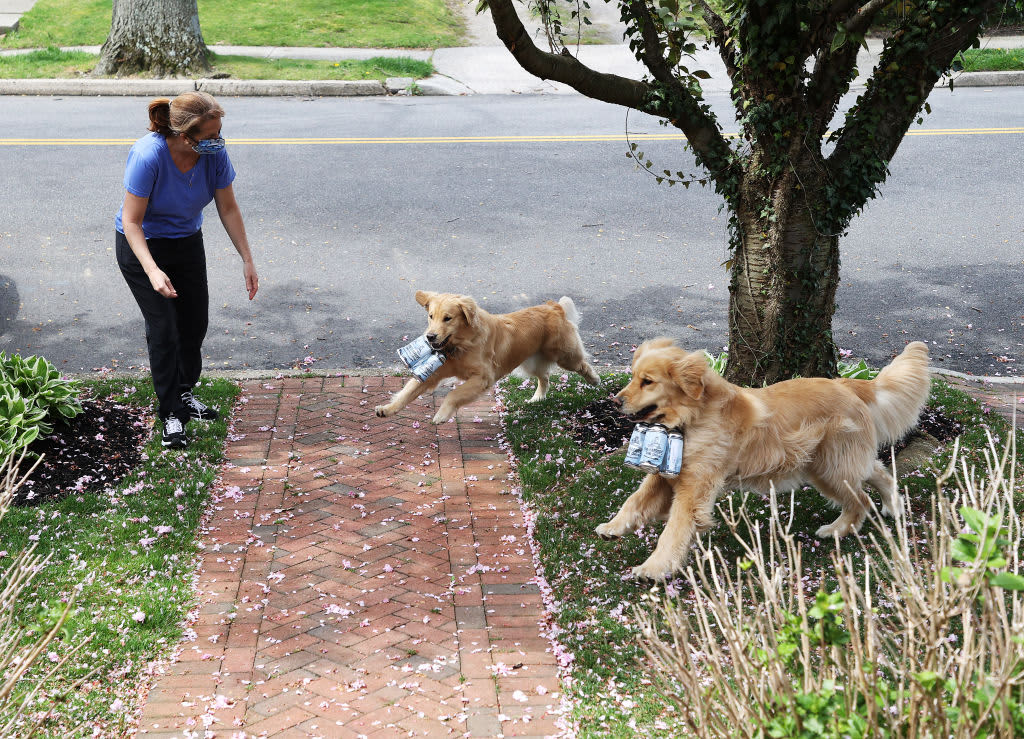 These golden retriever 'Brew Dogs' help deliver beer during social distancing—take a look