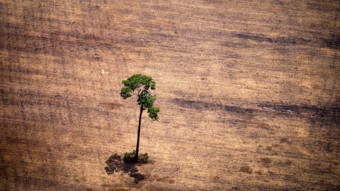 """Vista de un árbol en un área deforestada en medio de la selva amazónica durante un sobrevuelo de activistas de Greenpeace sobre áreas de explotación ilegal de madera, como parte de la segunda etapa del informe """"La crisis silenciosa del Amazonas"""", en el estado de Para , Brasil, el 14 de octubre de 2014. Según el informe de Greenpeace, los camiones de madera transportan de noche árboles talados ilegalmente a aserraderos, que luego los procesan y exportan la madera como si fuera de origen legal a Francia, Bélgica, Suecia y los Países Bajos ."""