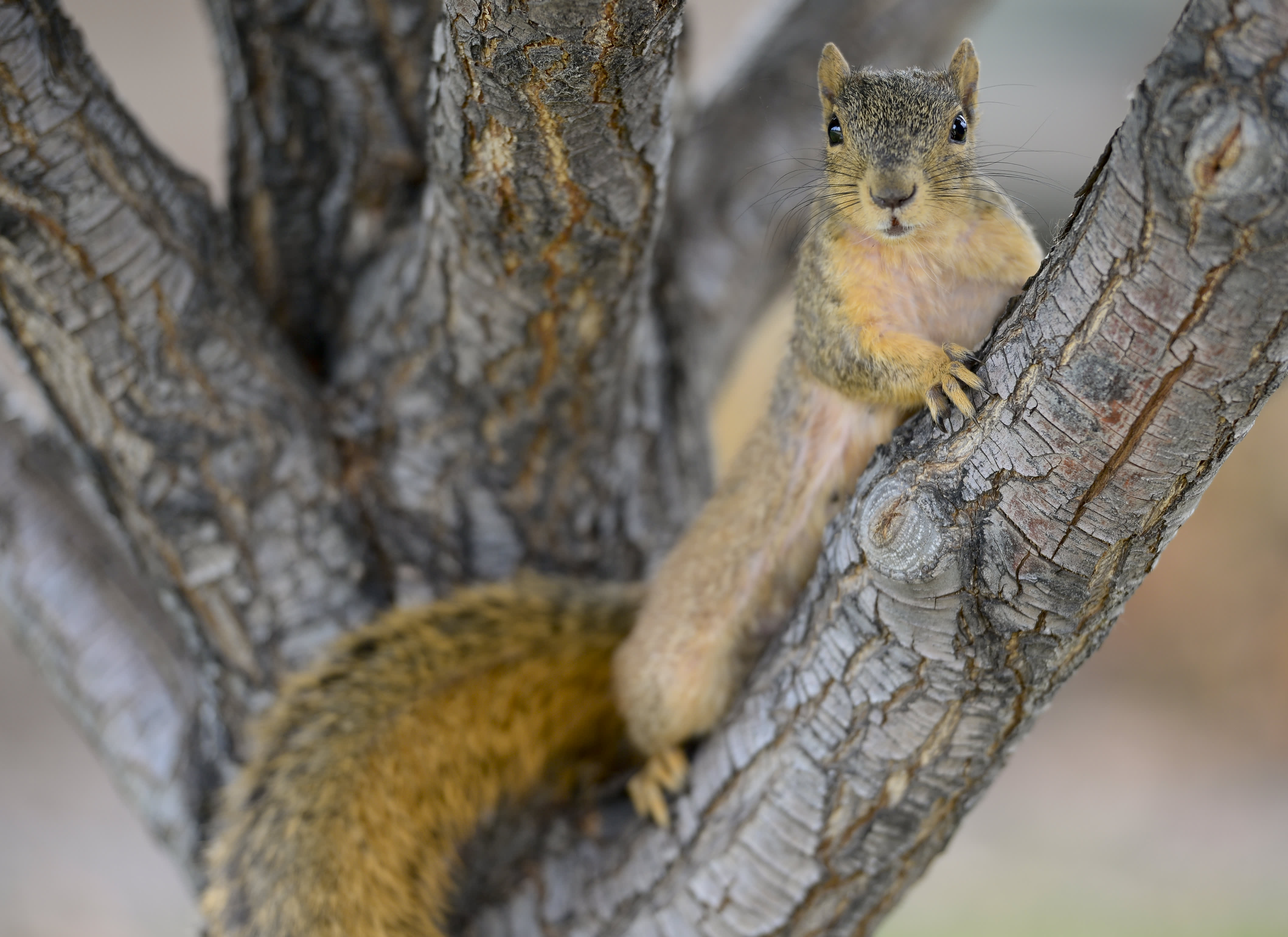 A squirrel has tested positive for the bubonic plague in Colorado – CNBC