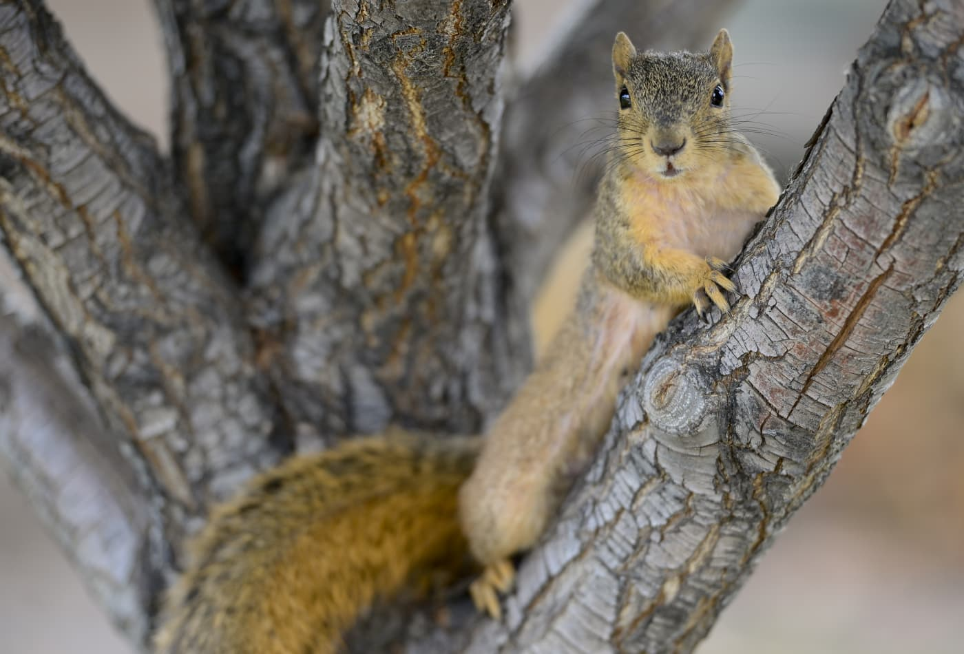 A squirrel has tested positive for the bubonic plague in Colorado