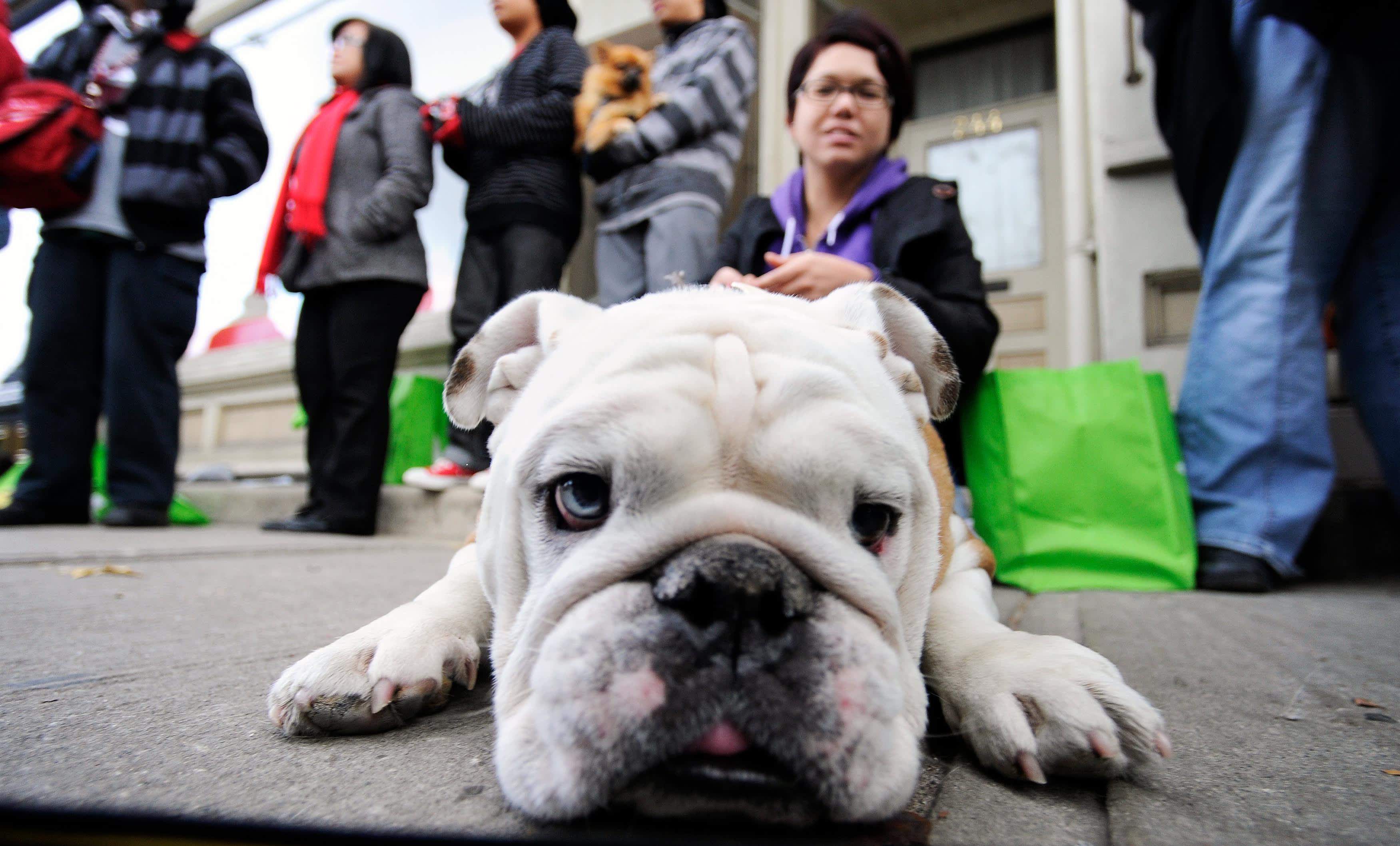 Pet Valu Pet Supply Retailer To Shut Down U S Operations