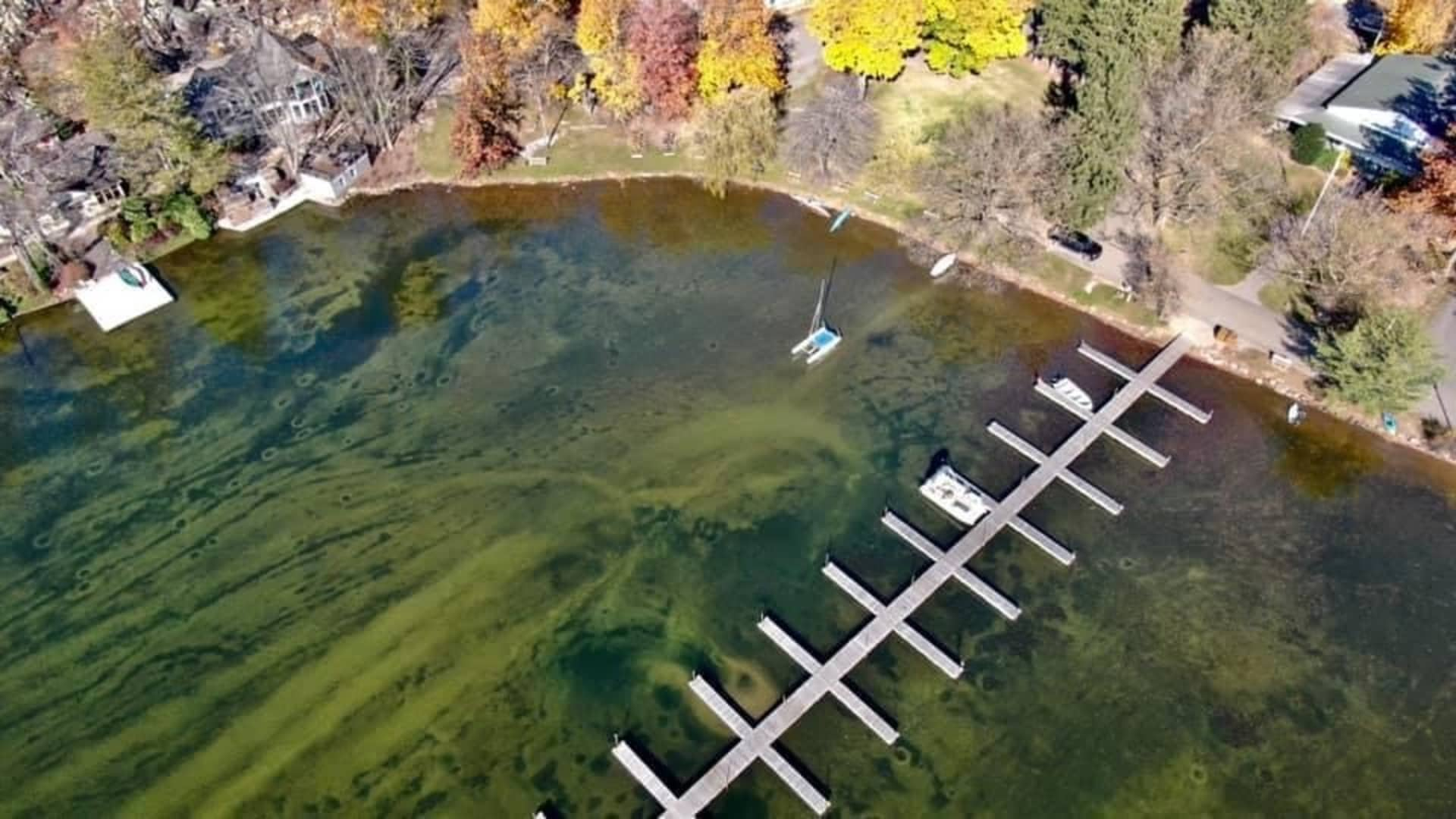 An aerial view of Green Pond Lake shows the damage and contamination milfoil has created, turning the lake a green color and making it uninhabitable for native species -- and swimmers.