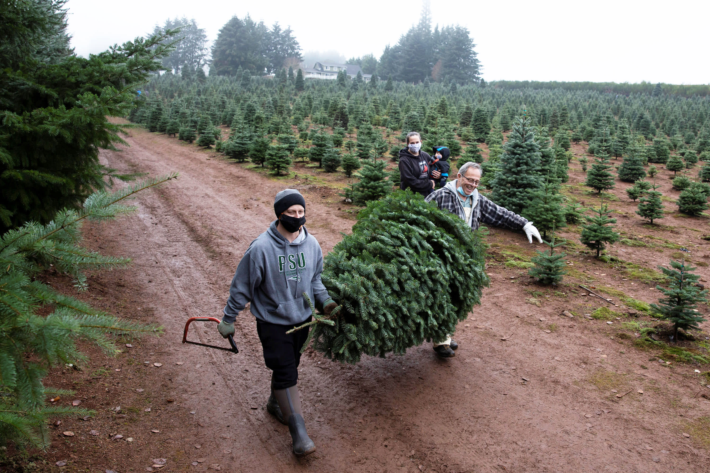 Christmas Tree Sales Are Telling A Holly Jolly Economic Story