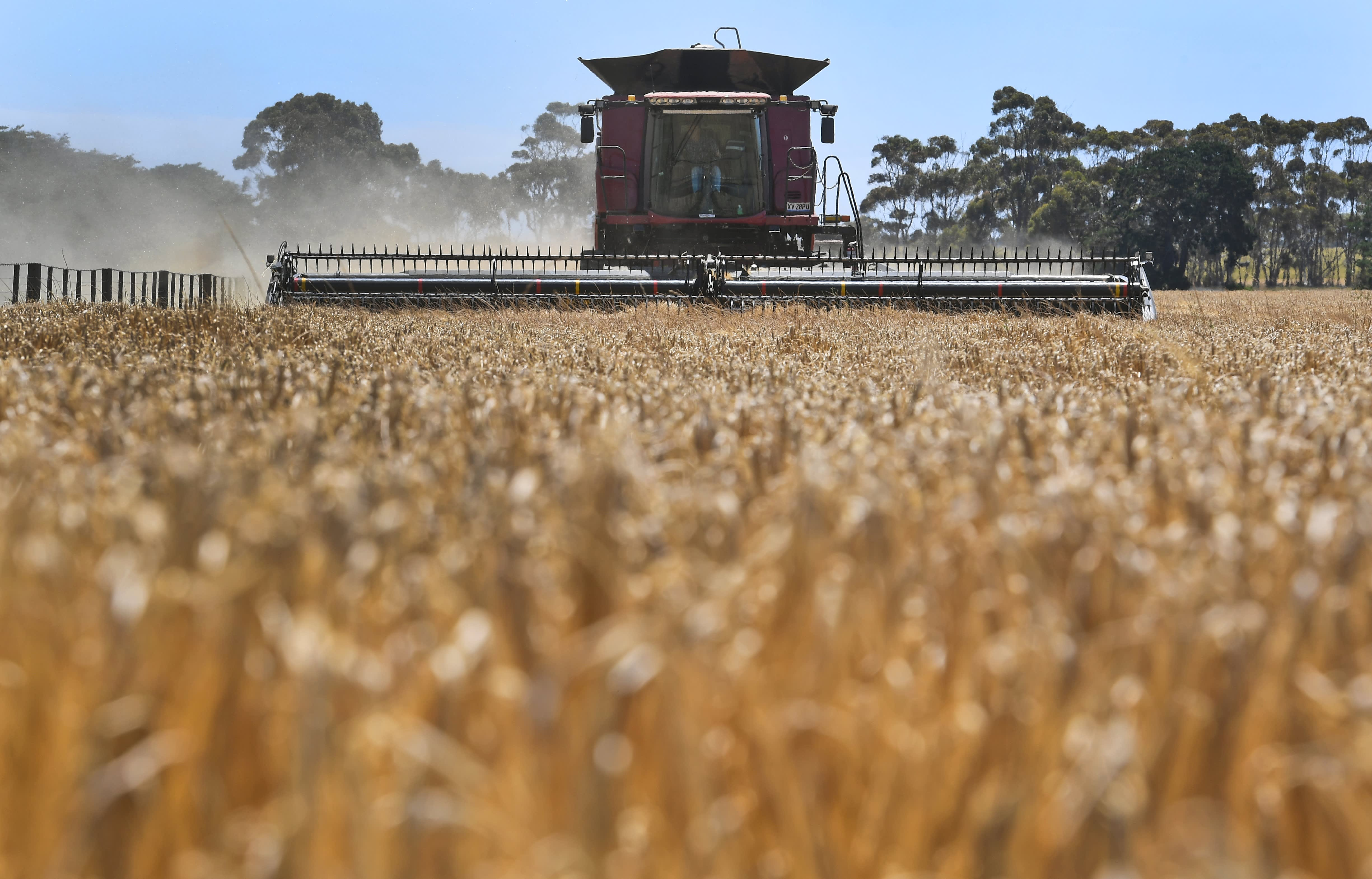Australia will formally ask the World Trade Organization to mediate barley dispute with China – CNBC
