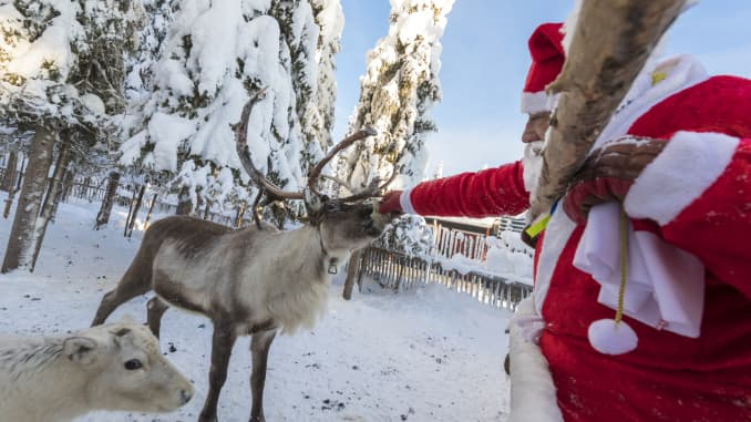 "A ""Santa Claus"" feeding reindeer in Lapland, Finland."