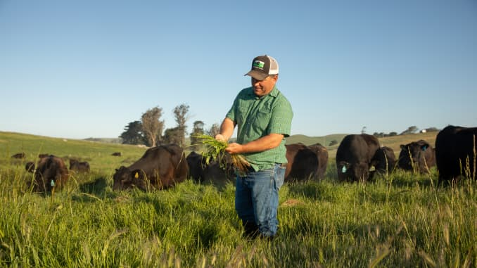 Fourth generation cattle rancher Loren Poncia has made Stemple Creek Ranch carbon positive. He's implemented rotational cattle grazing systems that allow soil and grass to recover, applied compost on pastures and planted chicory that aerate the soil.