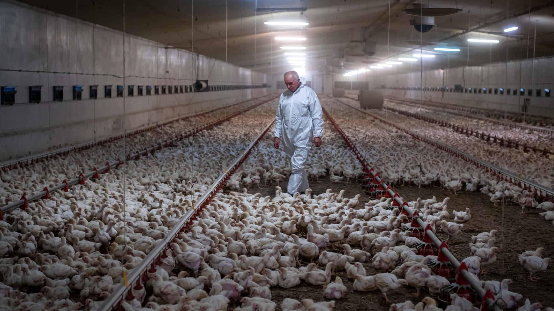 Chickens stored indoors in a meat production facility
