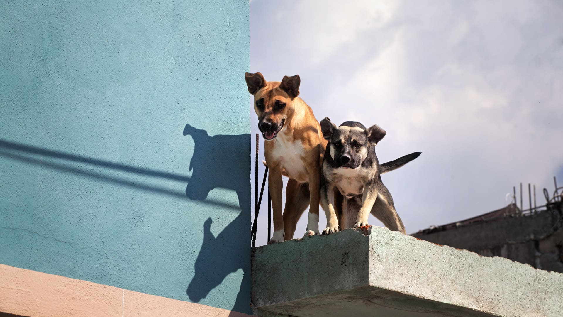 In many parts of Mexico, people keep dogs on their rooftops, both as a kind of early warning system and for convenience.