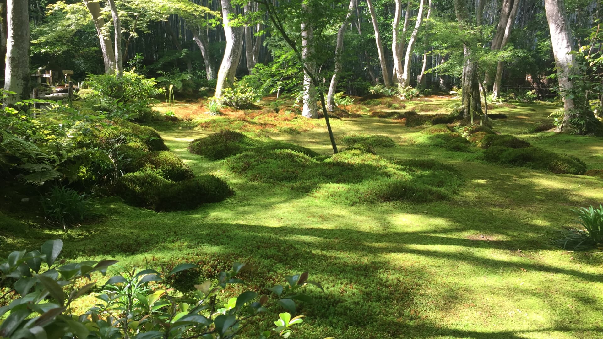 Another reason to go to Arashiyama Bamboo Grove — the area around the Gioji Temple.