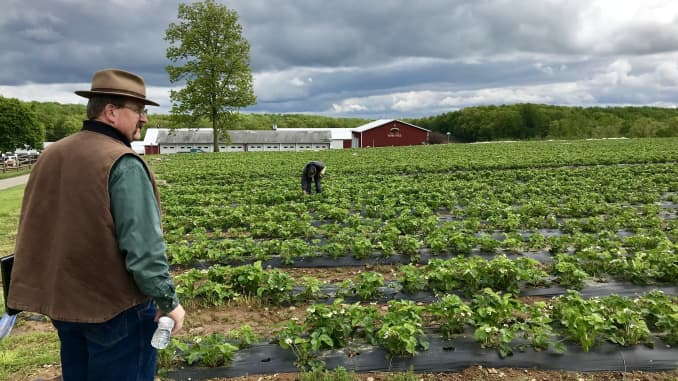 Kurt Alstede surveys his crops at Alstede Farms in Chester, New Jersey.