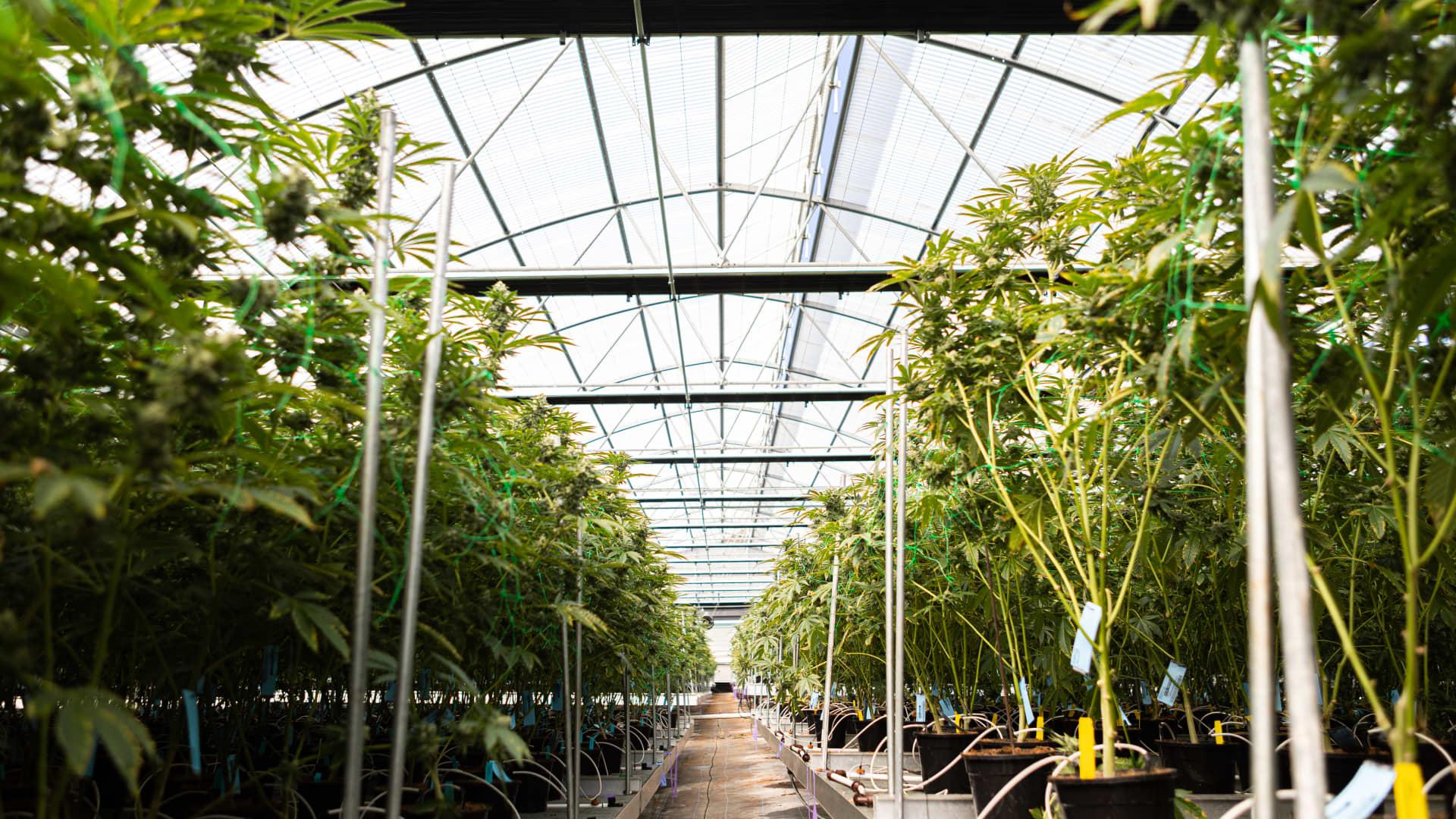 Glass House farm in California.