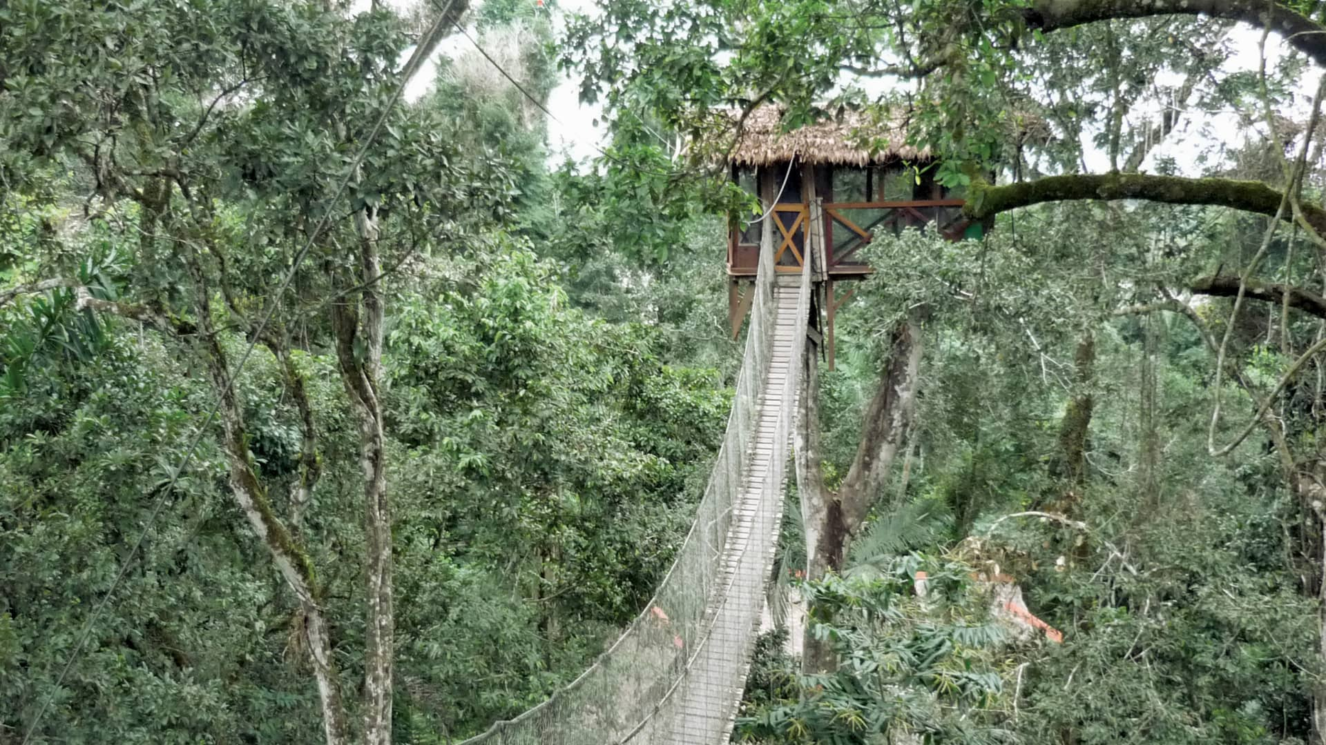 Guests at Peru's Inkaterra Reserva Amazonica treehouse sleep 70 feet above the rainforest floor.
