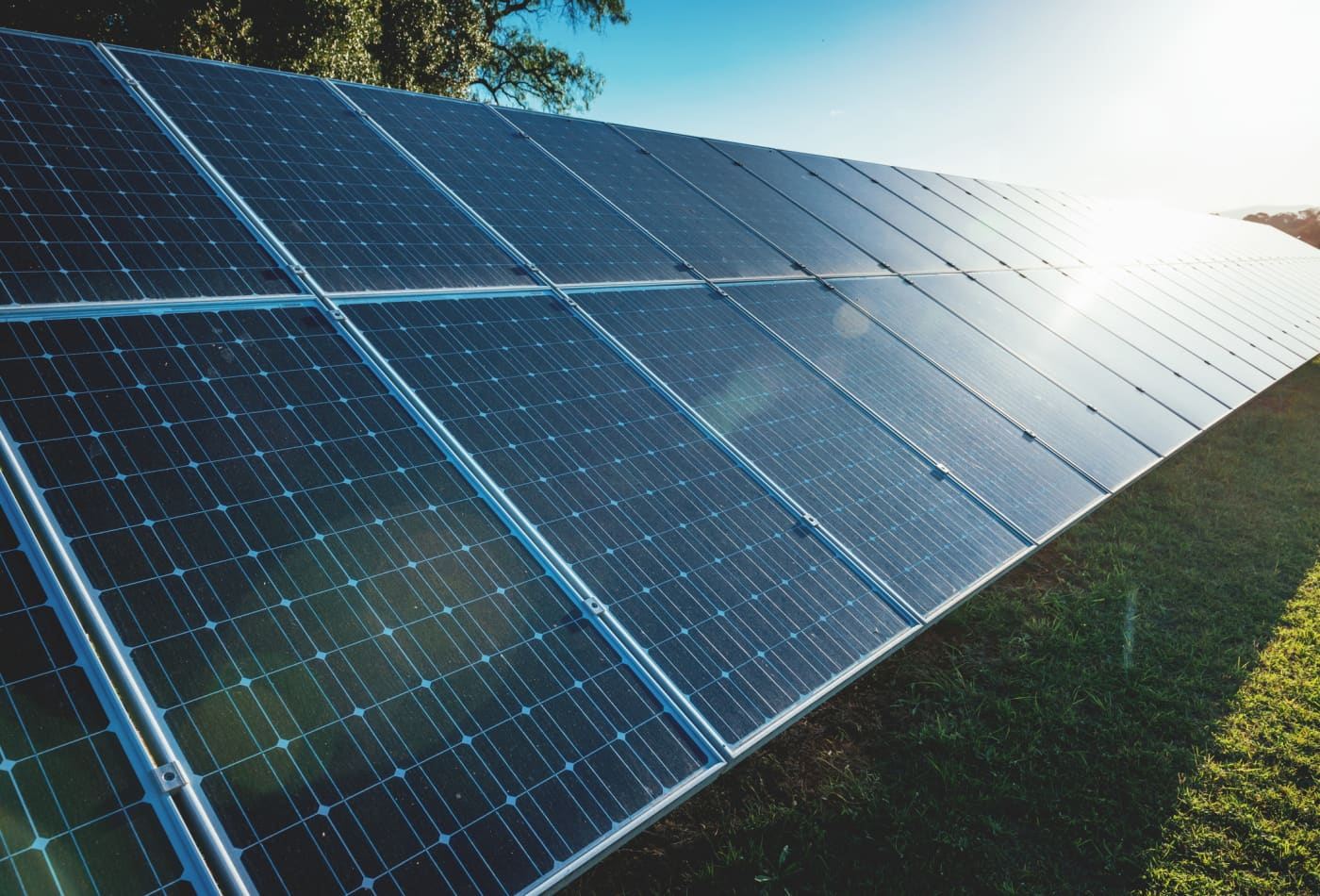 Farming and solar power set to combine in Netherlands-based pilot project