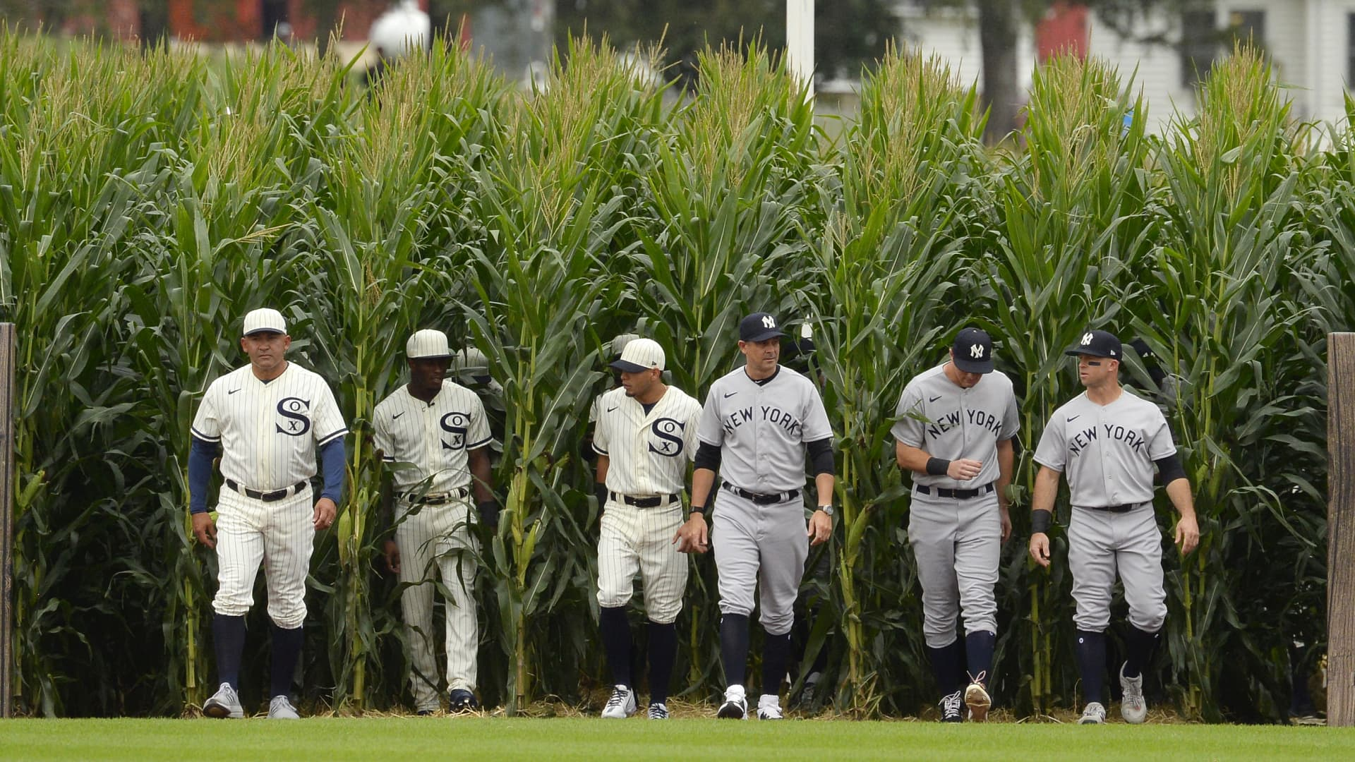 Players from the Chicago White Sox and New York Yankees walk though the corn rows while being introduced prior to the game on August 12, 2021 at Field of Dreams in Dyersville, Iowa.