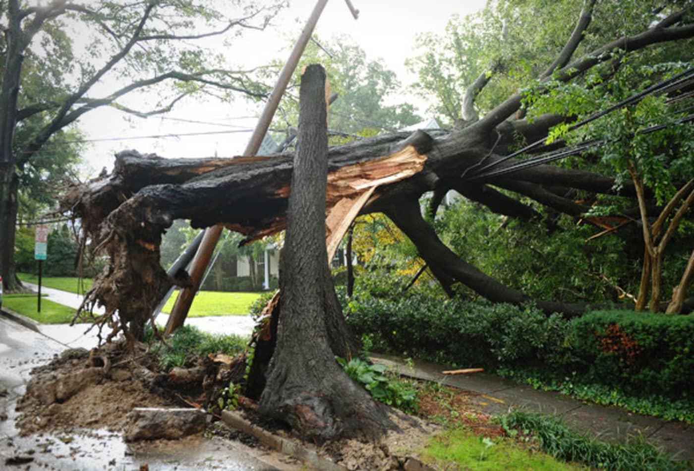 Irene_AUG28_DC_tree_split.jpg