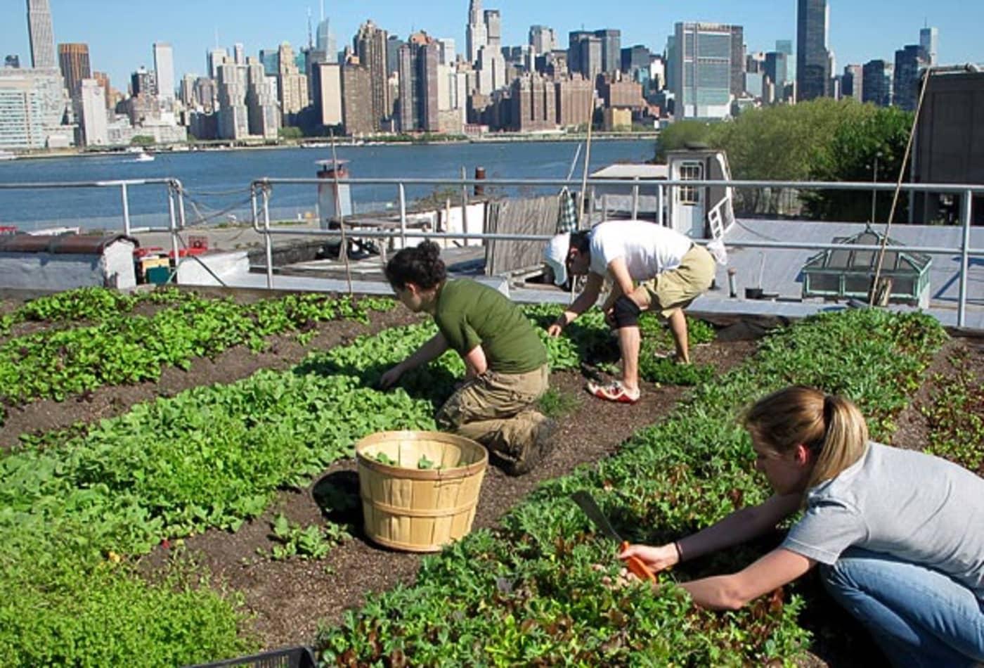 Organic-Farmer-21st-Century-Jobs-CNBC.jpg