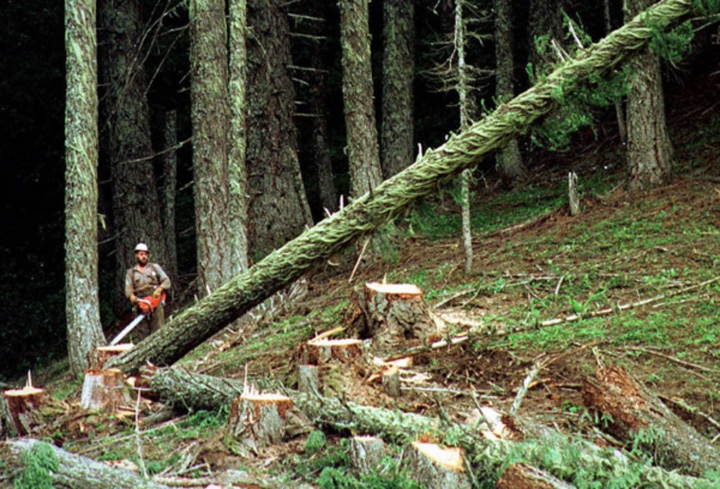 worst-jobs-2012-lumberjack.jpg