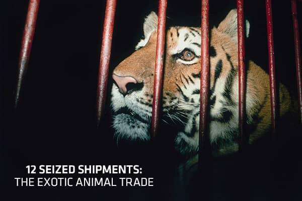 12-seized-shipments-cover.jpg