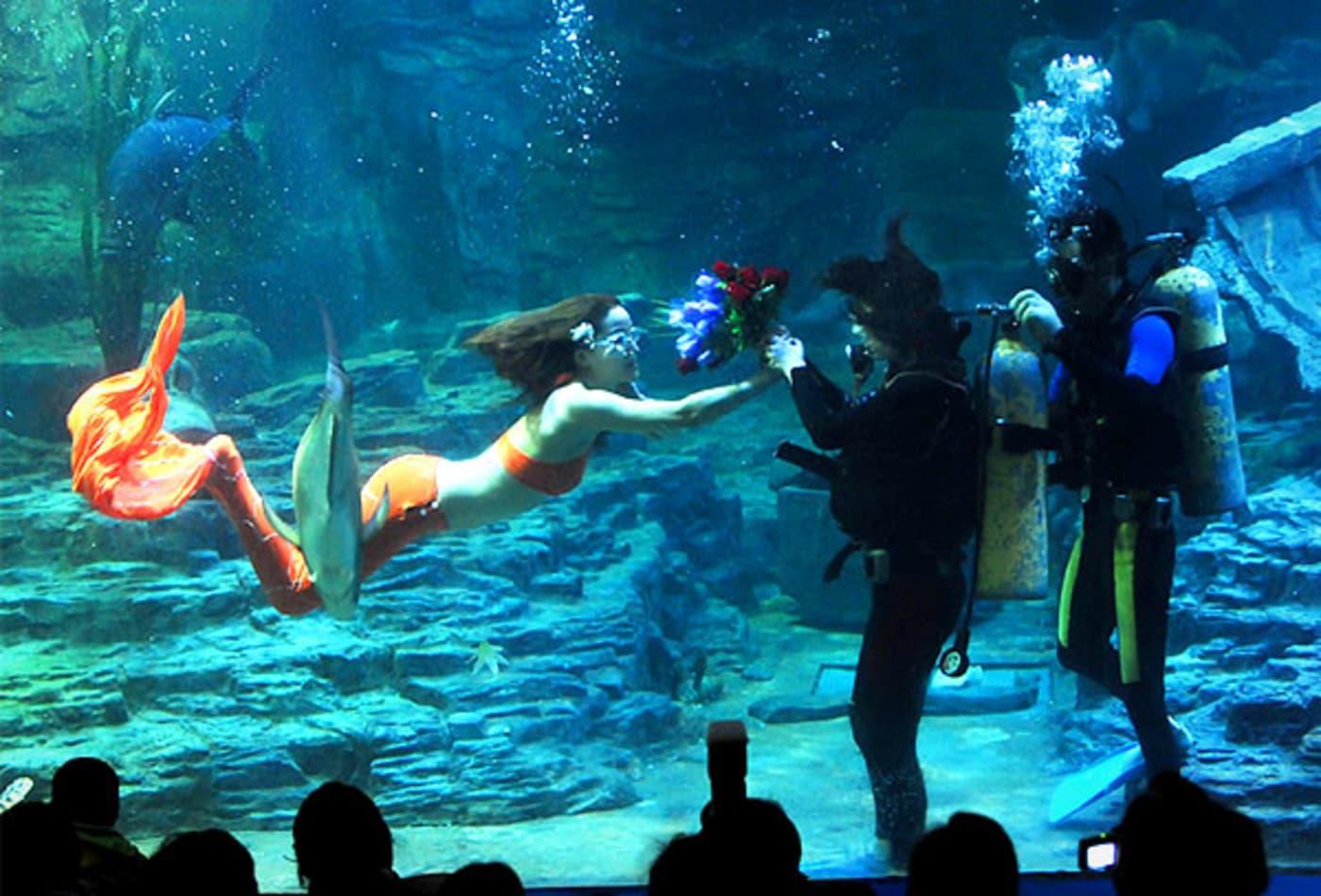 Mermaid-Cool-Jobs.jpg